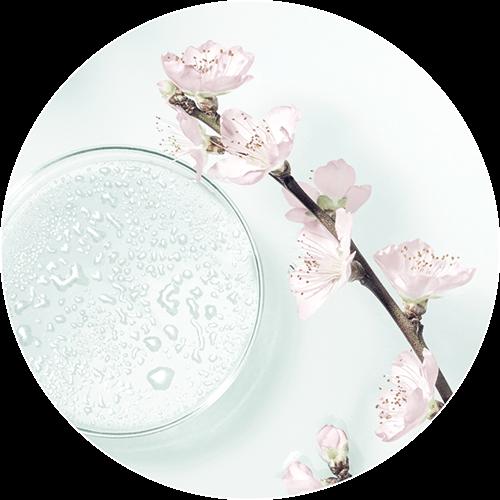 flor de sakura hidratante