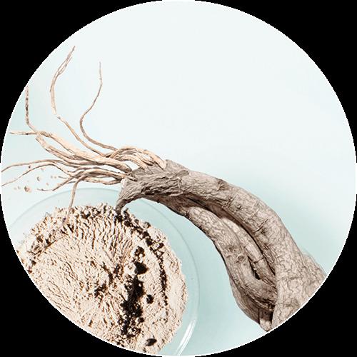 ginseng-rojo-antiarrugas