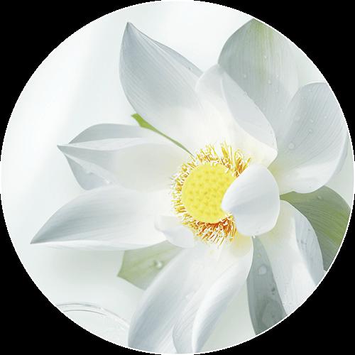 loto-sagrado-jowae